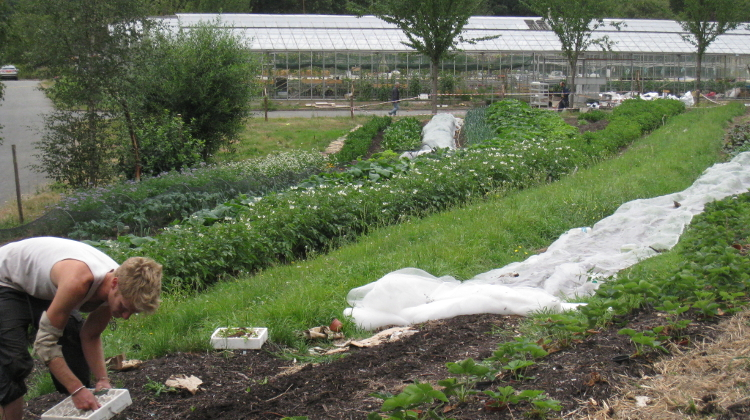 Organiclea Win Urban Food Award